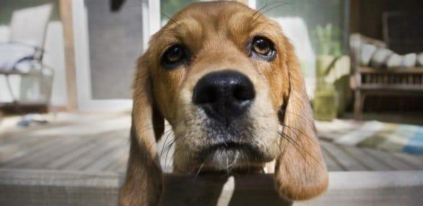 Faut-il abolir les cours pour proprios de chien?