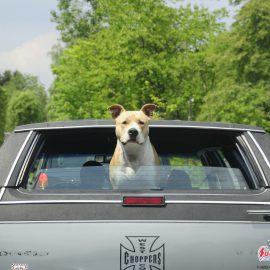 Mon chien en voiture : Les règles de sécurité