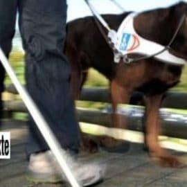Interdite d'un resto à cause de son chien d'aveugle