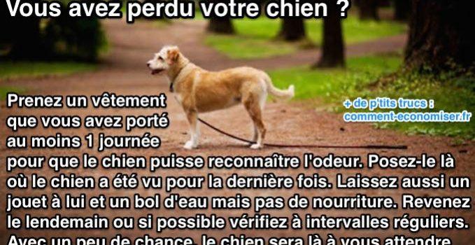 Guide pour retrouver son chien