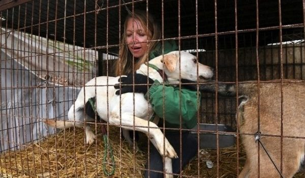 Éleveur de viande canine, un métier de chien