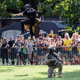 Ces policiers sur quatre pattes ont un flair de fou