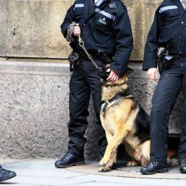 La loi vaudoise sur la police des chiens